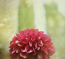 Dahlia Dreams by Lynn Starner