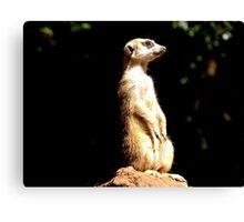 Meerkat - South Africa Canvas Print