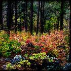 The Magic Forest  by Saija  Lehtonen