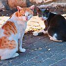 Alley Cats by Noam Gordon
