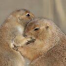 Love by Gili Orr