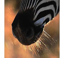 Stripes and whiskers Photographic Print