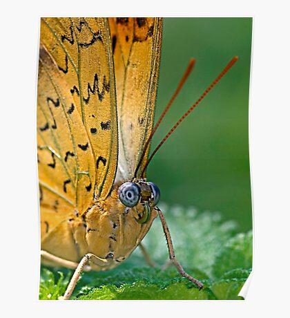 Julia Butterfly Poster