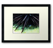 Juvenile White-eared Parma Framed Print