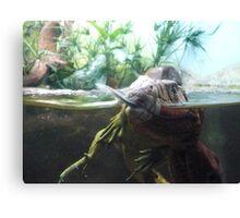 Reptiles Fighting Canvas Print