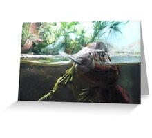 Reptiles Fighting Greeting Card