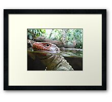 Reptile Close Up Framed Print