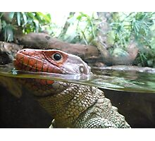 Reptile Close Up Photographic Print