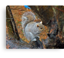 Looking for Mischief Canvas Print