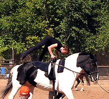 The Sport of Vaulting by © Loree McComb