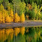 Aspens on the Lake by Eileen McVey