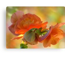 A Beguiling Begonia Canvas Print