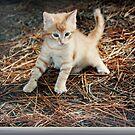 Cute Kitten by daffodil