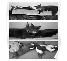The Art of Sleep Poster
