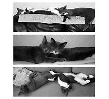 The Art of Sleep Photographic Print