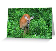 Summertime Visitor Greeting Card