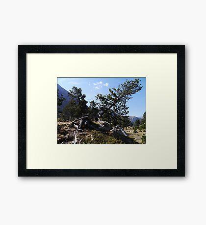 Timber Wolf... Framed Print