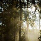Shafts of Autumn Sun by James Stevens