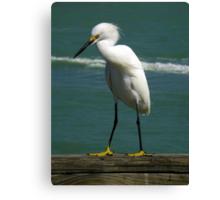 Birds On Pier : Strike The Pose Canvas Print