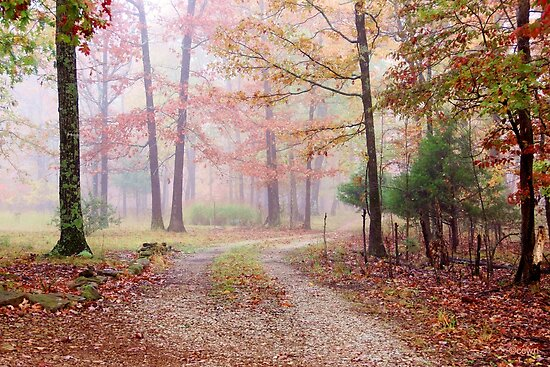Into The Autumn Mist by NatureGreeting Cards ©ccwri