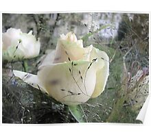 The Beauty of a Rose Poster