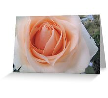 The Centre of a Rose Greeting Card