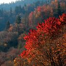 October in the Smokies by Jane Best