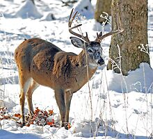 Winter Forage by ewersphoto