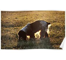 backlight. grazing Poster