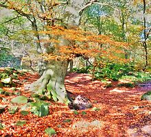 Autumn in Padley Gorge  by Elaine123