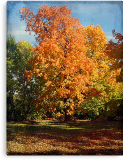 Changing Colors by Lucinda Walter