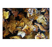 Fall series 7 Photographic Print