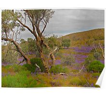 Spring Time in Outback Australia Poster