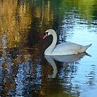 Swan Lake by shalisa