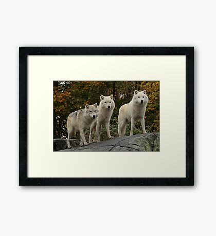 The guardians of the pack Framed Print