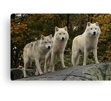 The guardians of the pack Canvas Print