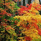 AUTUMN SPLENDOR by Chuck Wickham