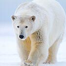 Ice Bear by Gina Ruttle  (Whalegeek)