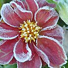 First Frost by Jill Vadala