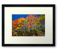 What Color Would You Like? Framed Print