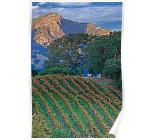 Private Hilltop Vineyard, Sonoma County, California Poster