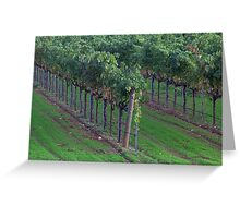 Vine Lines, Sonoma County, California Greeting Card