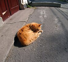 Wide angle view from the perspective distortion on the homeless cat by vladromensky