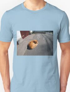 Wide angle view from the perspective distortion on the homeless cat T-Shirt