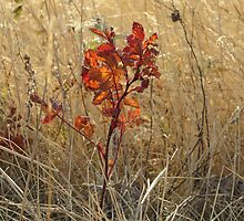 Brilliant Wild Rose Leaves by Kathi Arnell