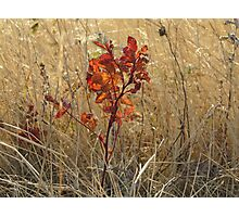 Brilliant Wild Rose Leaves Photographic Print
