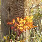 Autumn Fence by Kathi Arnell