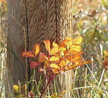 Autumn Fence by Kathi Huff