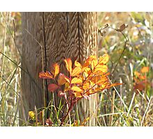 Autumn Fence Photographic Print
