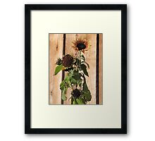 Frosted Sunflower Framed Print